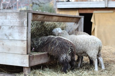 Hey! Have you any wool??