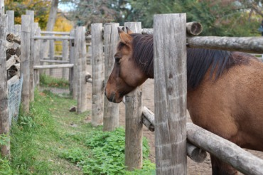 Horses love attention from visitors.