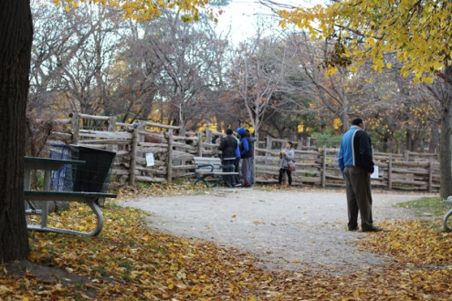 Families visiting in autumn.