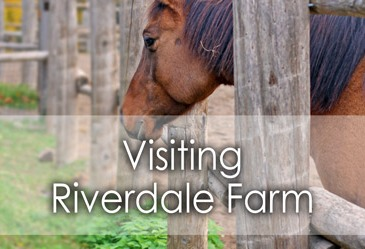 Visiting Riverdale Farm in Toronto - Lets Discover On Travel Blog
