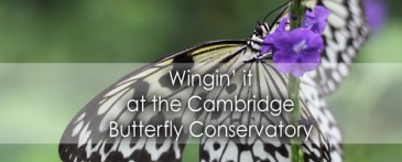 Wingin it at the Cambridge Butterfly Conservatory - Lets Discover ON Travel Blog