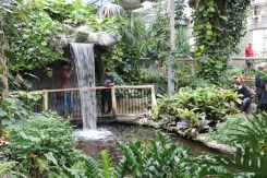 Indoor waterfall at the Conservatory.