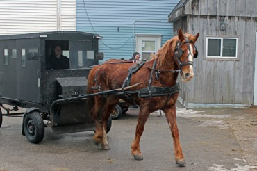 Horse and Buggy in the town of St Jacobs