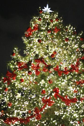 4 storey tall Christmas Tree!