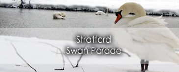The Stratford Swan Parade in Perth County - Lets Discover ON Travel Blog