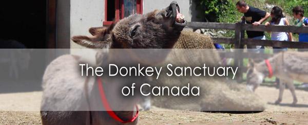 donkey-banner