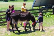 donkey6