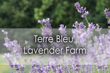 Terre Bleu Lavender Farm in Milton - Lets Discover ON Travel Blog