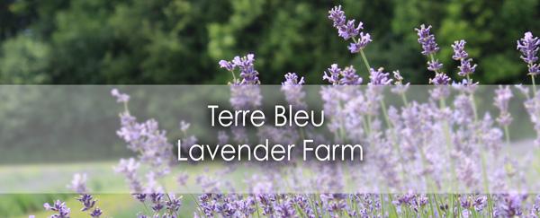 terre-bleu-banner-pic