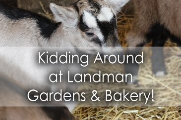Kidding around at Landman Gardens and Bakery on Goat Day in York Durham Headwaters - Lets Discover ON Travel Blog