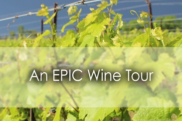 An EPIC wine tour in Windsor Essex - Lets Discover ON Travel blog