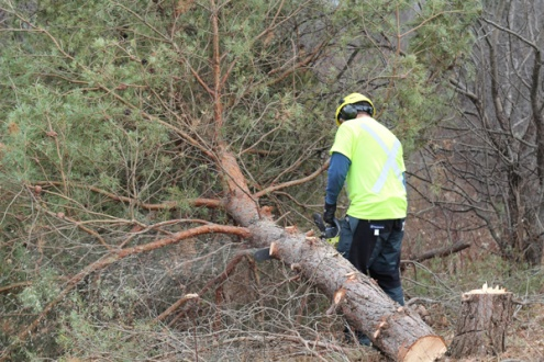 ON-Nature-Scots-Pine-Wreath---arborist-chainsaw-tree---Lets-Discover-ON