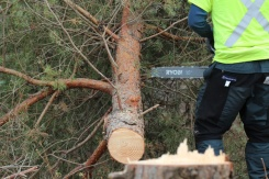 ON-Nature-Scots-Pine-Wreath---arborist-felling-tree---Lets-Discover-ON