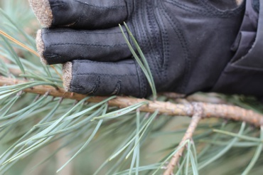 ON-Nature-Scots-Pine-Wreath---scots-pine-curved-needles---Lets-Discover-ON