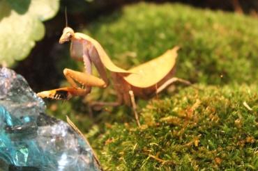 Sault-Ste-Marie-entomica-Lets-Discover-ON-4