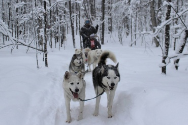 Winter-fun-with-Lets-Discover-ON-dogsledding--dogsled-group