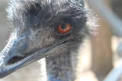 Riverview-Park-Zoo-emu-Lets-Discover-ON